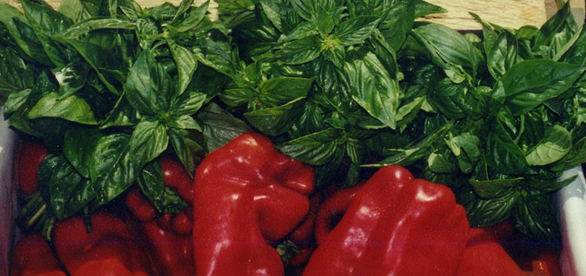 basil and red peppers