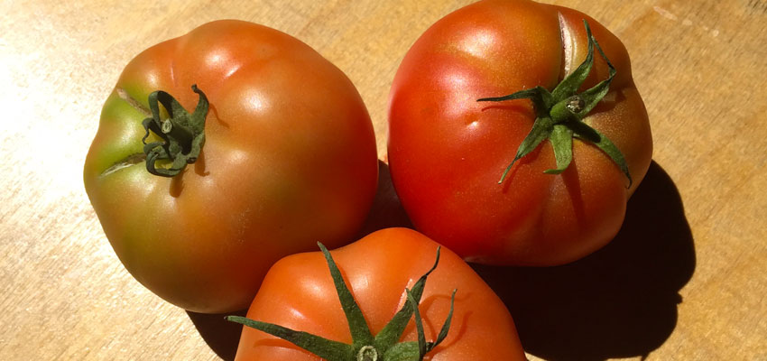 table-tomatoes