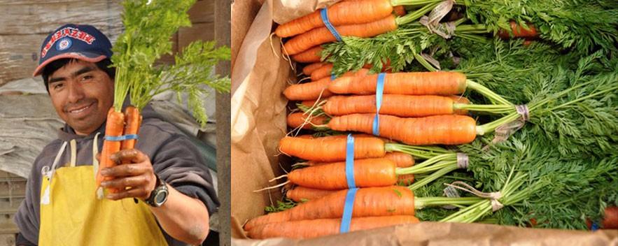 slide_carrots