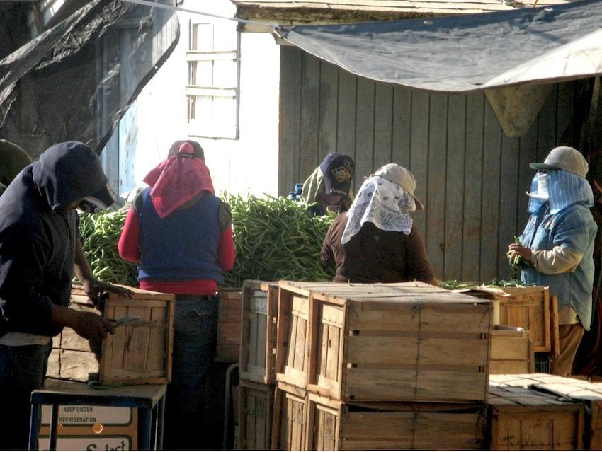 ladies-working