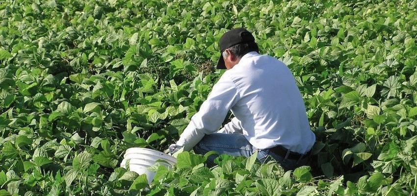 worker-in-field