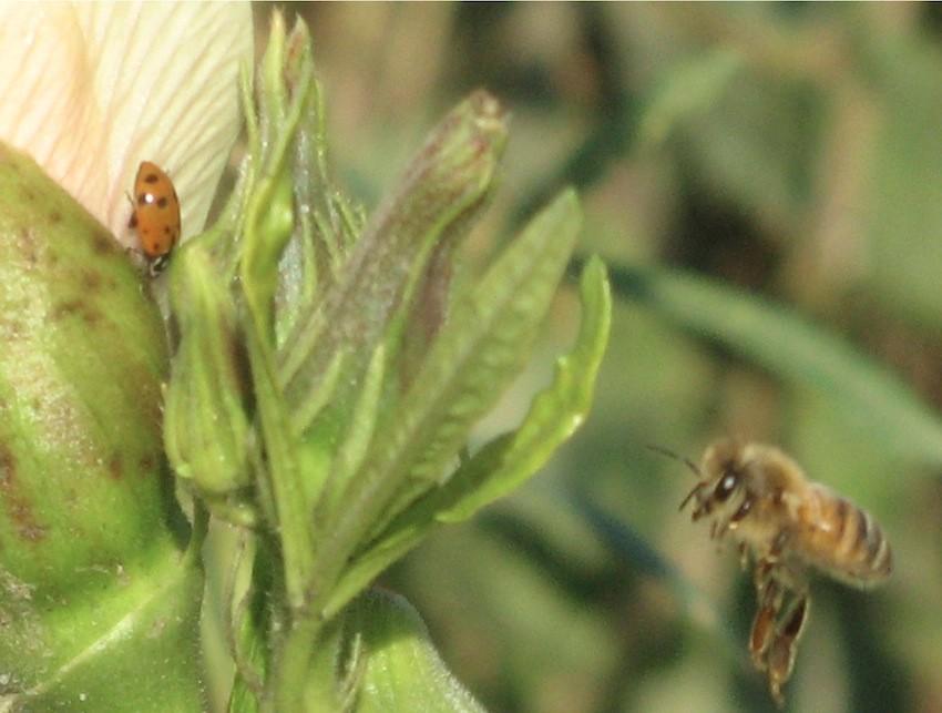 bee-ladybug