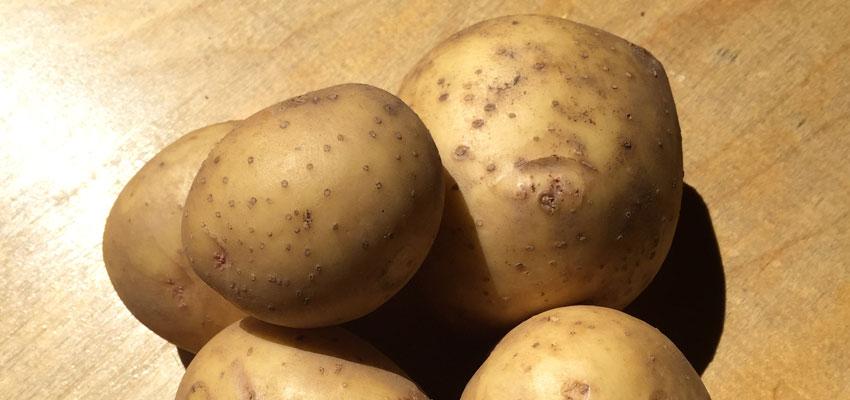 gold-potatoes