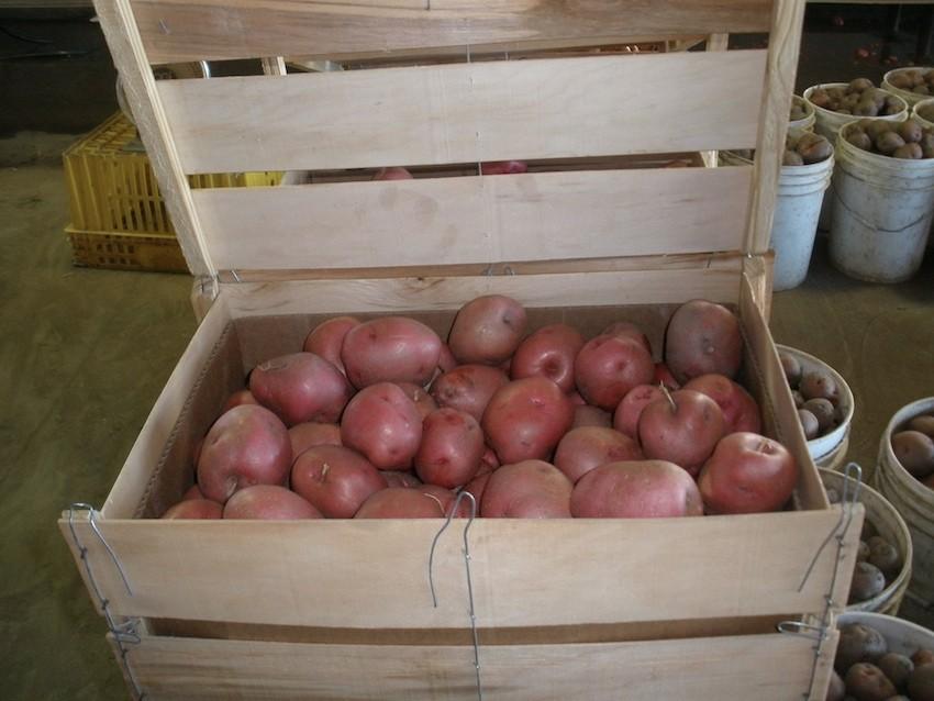 potatoes-wood-box